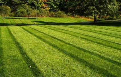 Organic lawn treatment